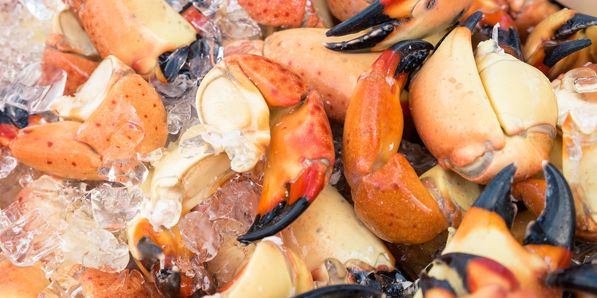 Seafood | South Beach Seafood Festival